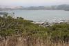Richardson Bay and Sausalito below.