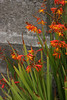 Golden flowers in the gardens near the Golden Gate bridge.