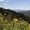 View from Newfound Gap with McDowell's sunflowers in the foreground.<br /> Stopping to enjoy the view before heading on to Clingman's Dome and Andrews Bald.