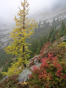 But we keep going... and finally start to see larch trees around 6000 feet.