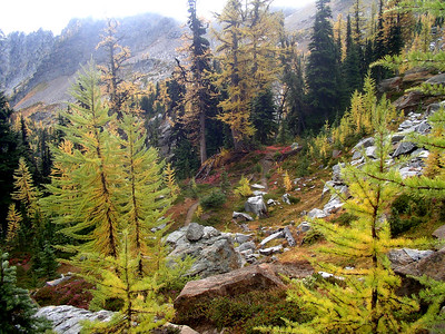 See the trail heading through the larches?