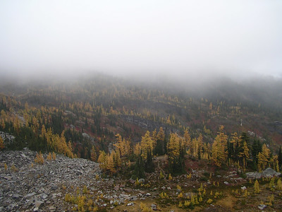 The clouds  are falling into the larches!