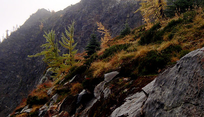 So we head down.  Some of the larches  are still green, like these two.