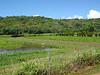 Hanalei Valley taro farm panorama