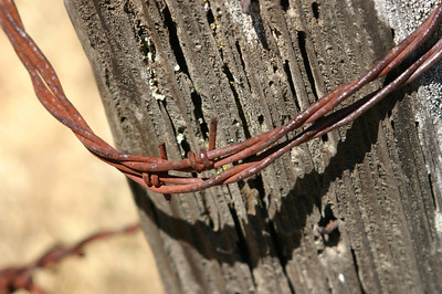 Cool barbed wire on termite-eaten wood.
