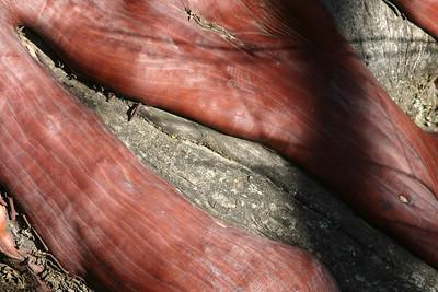 More red manzanita bark.