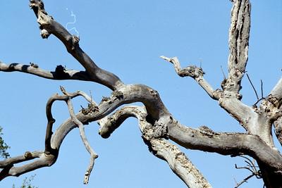cool branch