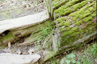 moss and stuff
