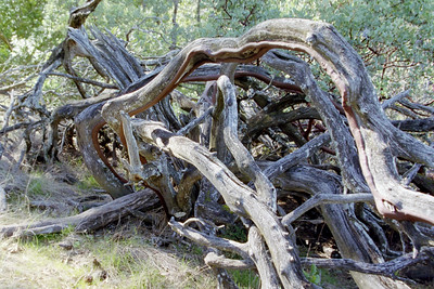 cool pile of dead wood