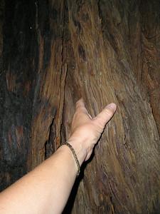 Redwood bark is deeply textured.