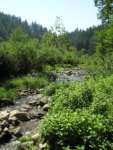 San Lorenzo River. Quiet, calm, perfect weather, not too many people around.