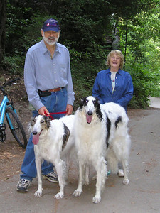 """Borzois (Russian Wolfhounds) Natalia and Vincent; Vincent is 34"""" at the shoulder. That's one big dog."""