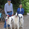 "Borzois (Russian Wolfhounds) Natalia and Vincent; Vincent is 34"" at the shoulder. That's one big dog."