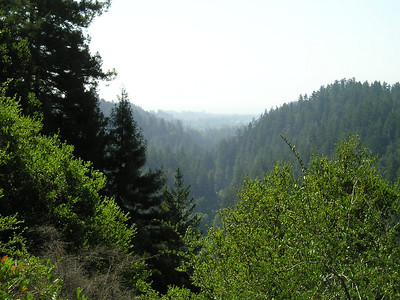 From the Overlook Bench at about 450 feet above sea level (started at ~120 maybe), looking down the San Lorenzo River valley to Santa Cruz. The Boardwalk rides were barely distinguishable in the haze.