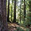 Cathedral Grove. Redwoods in a natural circle with a wide open area and a bench. Very peaceful.