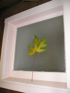 Same biffy window from the outside; a single leaf propped against the glass.