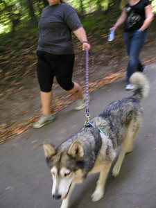 And we finish our tour of blurry dogs with this big ol' Siberian Husky.