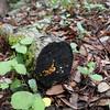 Interesting looking mushrooms growing on downed trees.