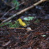 This was our second banana slug of the day.