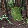 A lone stump among the living.
