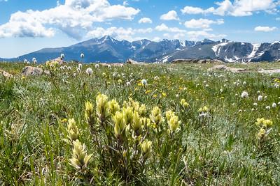 Wildflowers and Longs Peak