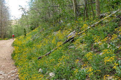 Lots of Yellow Wildflowers along the Road