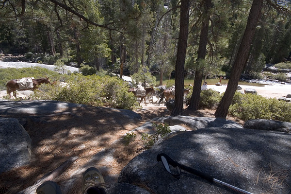 They caught up to me again while I was having lunch at Nevada Falls.