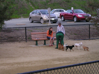 Our creative detouring allowed us to go by this very active dog park nestled away in the corner near the Bay. These little guys looked very happy to have friends.