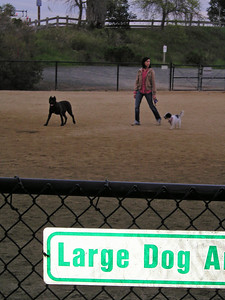 """I guess one's definition of """"Large Dog"""" varies."""