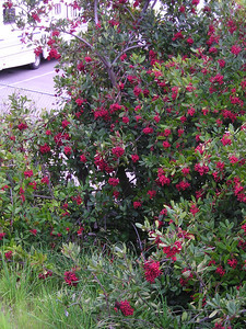 Even the shrubs with berries were a standout.