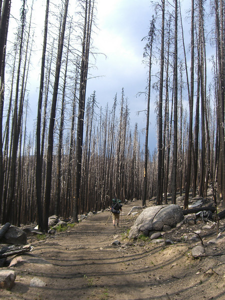 Pretty much the whole 4 miles to Sunny Pass travel through a dead forest. Spruce budworm disease has killed many of the trees and 2-3 years ago, the Tripod fire torched the forest as well. Very eerie to travel through..