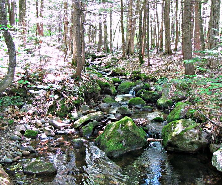 A Bog Brook tributary.