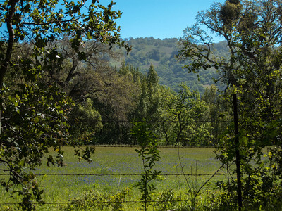 Our first view as we arrived at our parking spot--field filled with blue lupines. (Not yet in Kammerer property.)