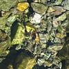Stones in Far Easedale Gill