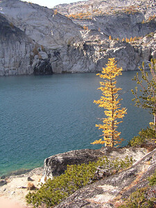 See all the larches on the far hillside.