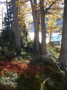 Pretty fall colors.