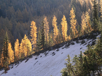 I like this one! It was amazing here with the light coming through all the larch trees.