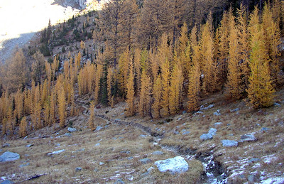 I like this one. The trail winding through a larch forest.