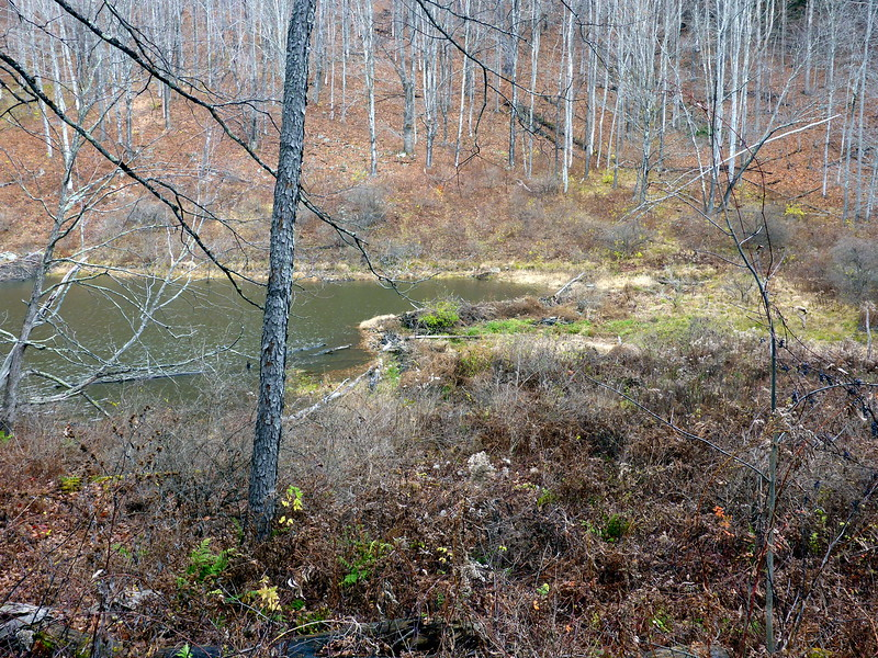 Beaver pond off West Kill Road (LP Section 29).