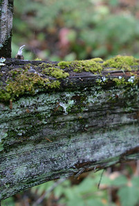 All that moss and lichen.