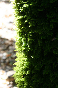 More of the same kind of moss I saw in abundance yesterday at Teague Hill.