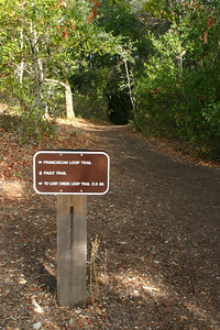 """(Station 3.) Much of the trail runs along a """"bench"""", which is a wide flat area that looks completely like an old logging road that has grown over. As the earth pulls apart, sediment settles into the cracks left on the surface, eventually forming a wide, road-like """"bench."""""""