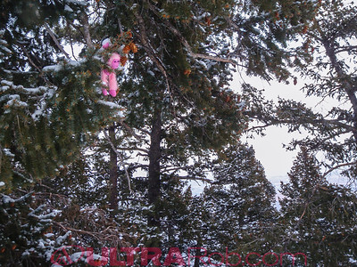 Pink Monkey in Tree at Top of Manitou Incline
