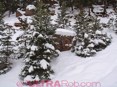 Snowy Trees Near Top of Manitou Incline