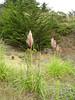 Grasses alongside the trail.