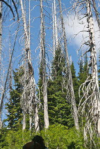 Barren tree glade