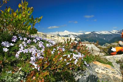 Phlox and Glacier Peak.