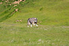 Tika in the field.