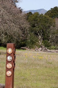 Trail markers, flowers, and a view to the mountains beyond. Could that be Mount Diablo?