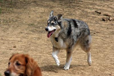 Tika on the trail.